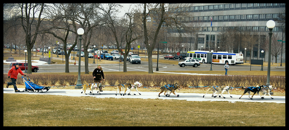 Sled Dogs To St. Paul